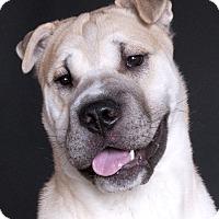 Adopt A Pet :: Zero - Chicago, IL