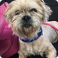 Adopt A Pet :: Arrow - Encino, CA