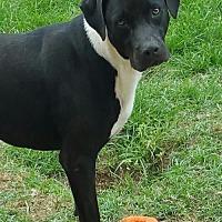 Adopt A Pet :: Ruler - Shreveport, LA
