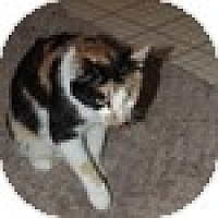 Adopt A Pet :: Patches - Vancouver, BC