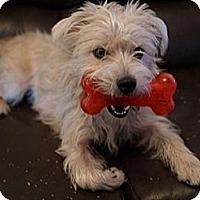 Adopt A Pet :: Scamp - Hamilton, ON