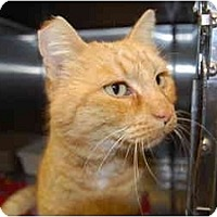 Adopt A Pet :: Baby Red - Modesto, CA