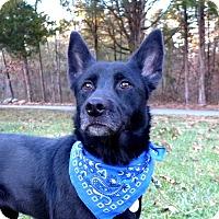 Adopt A Pet :: Mystic - Mocksville, NC