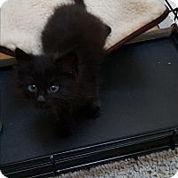 Adopt A Pet :: Cinder - Pasadena, CA