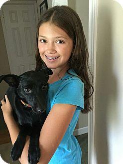 Basenji/Chihuahua Mix Dog for adoption in Jacksonville, Florida - Reba