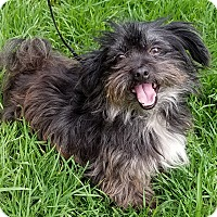 Adopt A Pet :: Amy - Los Angeles, CA