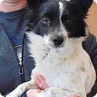 Adopt A Pet :: Chance - Boulder, CO