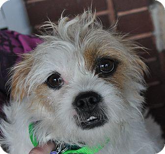 Small Dog Rescue Atlanta Ga