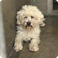 Adopt A Pet :: Benny - Encino, CA