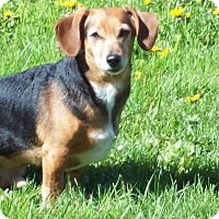 Adopt A Pet :: CHEWIE - Portland, OR