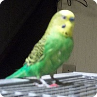 Adopt A Pet :: Prince - Lenexa, KS