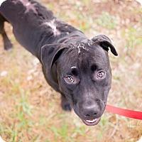 Adopt A Pet :: Faith - San Antonio, TX
