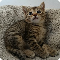 Adopt A Pet :: Frozen II Family---Anna - Florence, KY