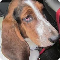 Adopt A Pet :: Pawline - Barrington, IL