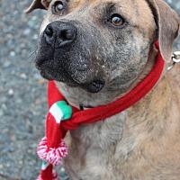 Adopt A Pet :: Emma - Ellijay, GA