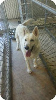 German Shepherd Dog Dog for adoption in Greeley, Colorado - Mia