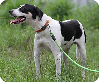 Hound (Unknown Type) Mix Dog for adoption in Cat Spring, Texas - Cooper