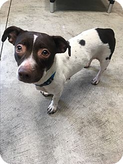 Terrier (Unknown Type, Small) Mix Dog for adoption in Nashville, Tennessee - Esther