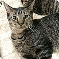 Adopt A Pet :: Joey - the explorer - Tucson, AZ