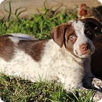 Adopt A Pet :: Ringo - Humble, TX