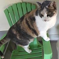 Adopt A Pet :: Kalia - Bradenton, FL