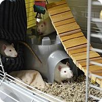 Adopt A Pet :: Escobar, Blanco & Khun - Brooklyn, NY