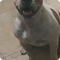 Adopt A Pet :: Audry - Pompano Beach, FL