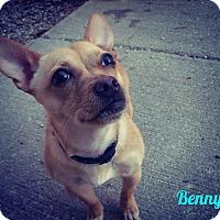 Adopt A Pet :: Benny - Muskegon, MI