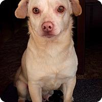 Adopt A Pet :: Todd - Adoption Pending - Gig Harbor, WA