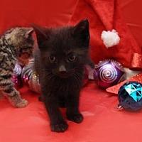 Adopt A Pet :: Dot aka Max - Kenner, LA