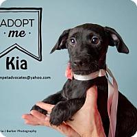 Adopt A Pet :: Kia - Pearland, TX