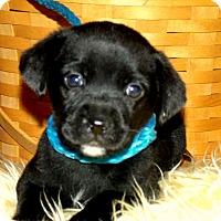 Adopt A Pet :: SHAY/ADOPTED - PRINCETON, KY