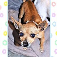 Adopt A Pet :: Chi fem - San Jacinto, CA