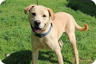 Labrador Retriever Mix Dog for adoption in Conway, Arkansas - Heath