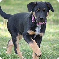 Adopt A Pet :: June - Aurora, CO