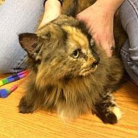 Adopt A Pet :: Tiramisu - Acushnet, MA