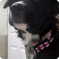 Adopt A Pet :: Kasie - Alpharetta, GA