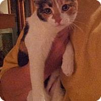 Adopt A Pet :: Pot Luck - Troy, OH