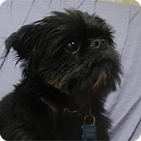 Adopt A Pet :: Griff ADOPTED!! - Antioch, IL