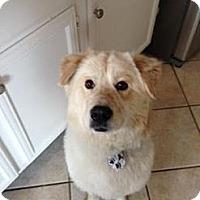 Adopt A Pet :: Derek - New Boston, NH