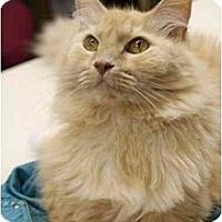 Adopt A Pet :: Gus - Racine, WI