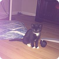 Adopt A Pet :: North - Edmonton, AB