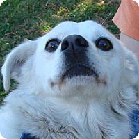 Adopt A Pet :: Jean - Erwin, TN