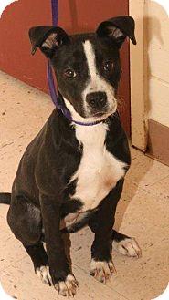 Terrier (Unknown Type, Medium) Mix Dog for adoption in McDonough, Georgia - ROSEANN