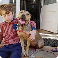 Adopt A Pet :: Lisa - Lebanon, ME