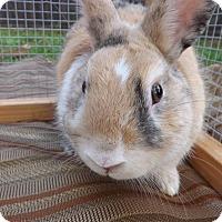 Adopt A Pet :: Buster - Palm Coast, FL