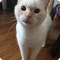 Adopt A Pet :: Fleur - Toronto, ON