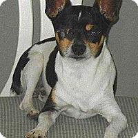 Adopt A Pet :: Captain Jack Paris - Oklahoma City, OK