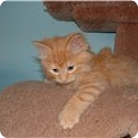 Adopt A Pet :: Woodstock - Richfield, OH