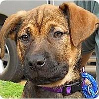 Adopt A Pet :: Hannah - Kingwood, TX